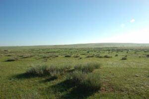 111203 300x200 - 【乗馬・馬術板】モンゴルの大草原