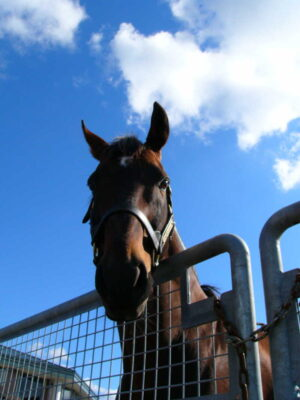 111403 300x400 - JBBA、2013年度の種牡馬配置を決定…サマーバード導入、オペラハウス引退