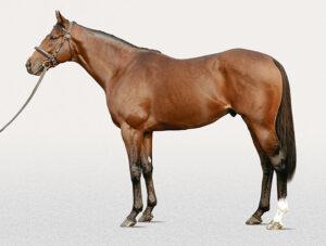111608 300x227 - ダーレー・ジャパン、来年から種牡馬キングズベスト(牡15)を供用