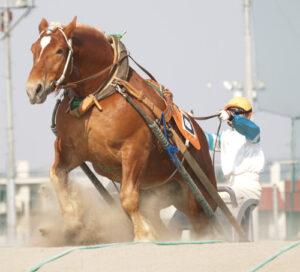 120101 300x272 - ばんえい競馬が人気テレビ番組「ほこ×たて」「ごきげん歌謡笑劇団」に登場!