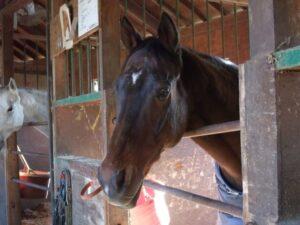 122806 300x225 - G1級と呼ばれたが、鳴かず飛ばずで終わった馬