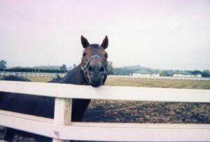 011604 300x203 - 86年の愛2000ギニーを勝ったフラッシュオブスティールが死亡、30歳…産駒にナガラフラッシュ