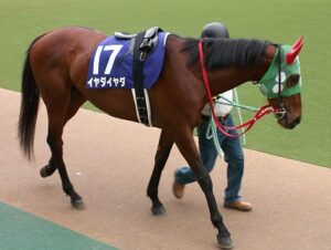 011905 300x226 - こいつは走らない、馬の名前は?