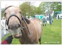 594c3b05 - 皐月賞馬キャプテントゥーレの全弟リジェネレーション、屈腱炎で放牧へ 父アグネスタキオン母エアトゥーレ