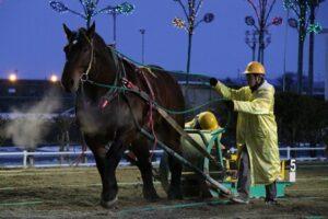 bca03e053e60602b512c1fb87d769e8f 300x200 - 【帯広記念】この馬、本当に強い!馬じゃないよ…絶対王者カネサブラック、スーパーペガサスに並ぶ重賞20勝目