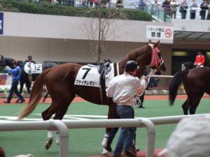060801 300x225 - ノーザンホースパークで乗用馬のせり市開催 9年前に約3億円で落札されたサラブレッドも登場