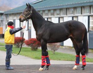 9211993f 300x235 - G1・7勝馬ウオッカ初子の馬名募集