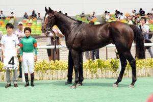 50baa8e2 300x200 - 巨漢馬ショーグン、JRA史上2位の馬体重604キロで勝利