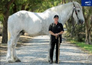 cfb74cb6 300x211 - 巨漢馬ショーグン、JRA史上2位の馬体重604キロで勝利