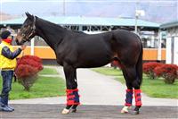 295cc6b8 - G1・7勝馬ウオッカの初子(牡2)、馬体はさらに成長して593キロ!年内または来年1月のデビューを目指す