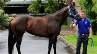 a35e565f - G1・7勝馬ウオッカの初子(牡2)、馬体はさらに成長して593キロ!年内または来年1月のデビューを目指す