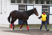 d4d78abb - G1・7勝馬ウオッカの初子(牡2)、馬体はさらに成長して593キロ!年内または来年1月のデビューを目指す
