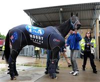 d7dec50c - G1・7勝馬ウオッカの初子(牡2)、馬体はさらに成長して593キロ!年内または来年1月のデビューを目指す