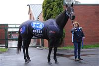 ef3036b1 - G1・7勝馬ウオッカの初子(牡2)、馬体はさらに成長して593キロ!年内または来年1月のデビューを目指す