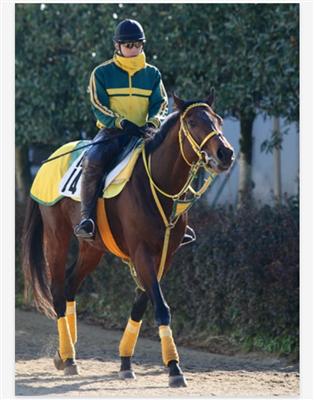 229a19fc - お前らって顔や馬体でどの馬か判別できるの?