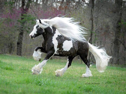 keiba 1535981624 8801 - 殿様「よき働きじゃった。うぬに好きな駿馬をくれてやろう」←なに選ぶ?