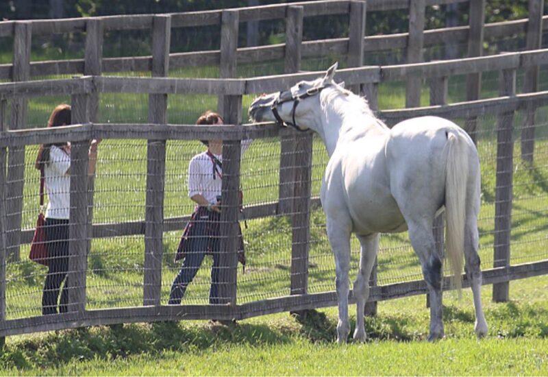 keiba 1539006268 6301 - 横山典「騎手を好きな馬なんているわけない。いたらその馬はバカ」