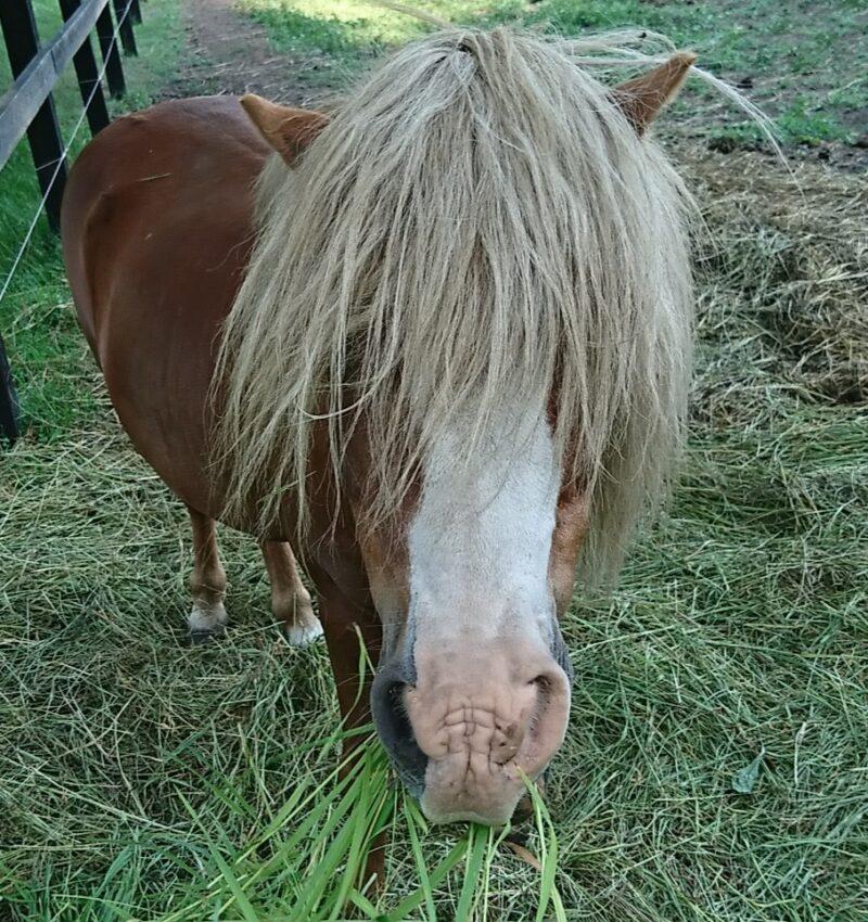 keiba 1586748397 1301 - 【画像】暇だから可愛い馬の画像をみよう