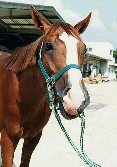 keiba 1586748397 1601 - 【画像】暇だから可愛い馬の画像をみよう