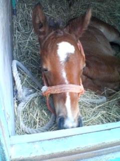 keiba 1586748397 1801 - 【画像】暇だから可愛い馬の画像をみよう