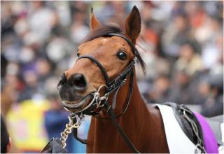 keiba 1586748397 4001 - 【画像】暇だから可愛い馬の画像をみよう