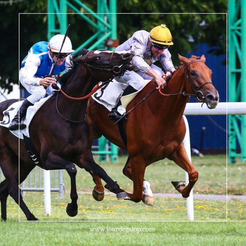keiba 1586748397 401 - 【画像】暇だから可愛い馬の画像をみよう