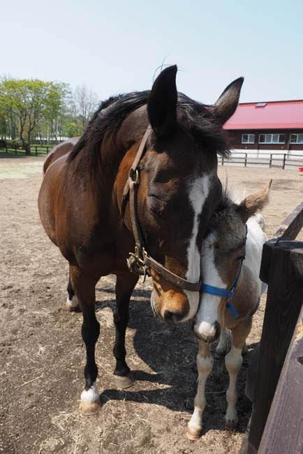 keiba 1586748397 4403 - 【画像】暇だから可愛い馬の画像をみよう