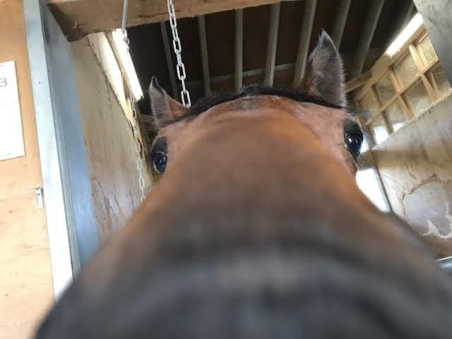keiba 1586748397 4404 - 【画像】暇だから可愛い馬の画像をみよう