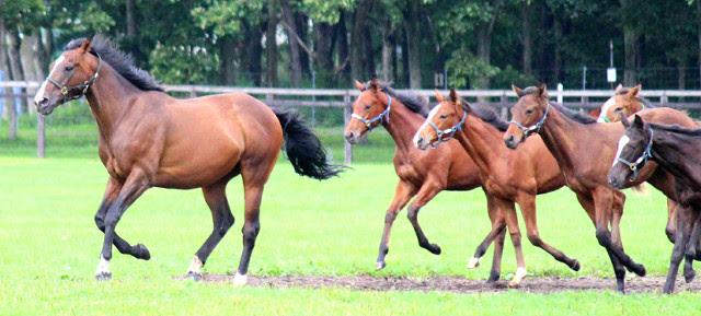keiba 1586748397 4405 - 【画像】暇だから可愛い馬の画像をみよう