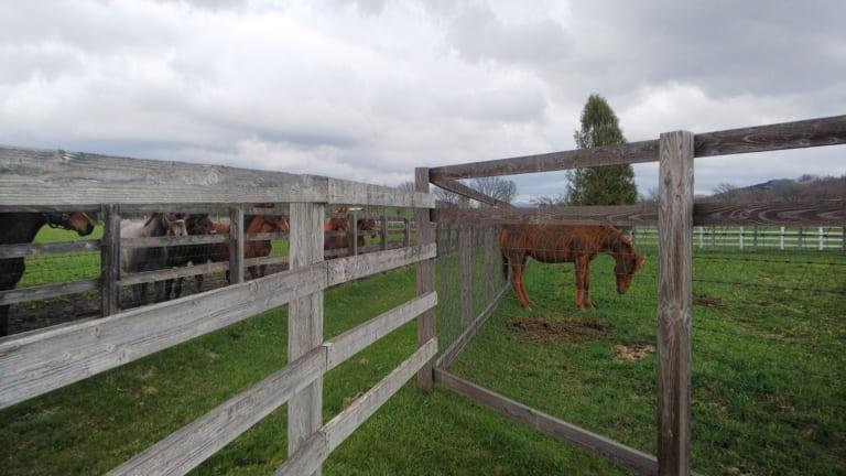 keiba 1586748397 5001 - 【画像】暇だから可愛い馬の画像をみよう