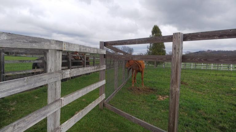keiba 1586748397 5002 - 【画像】暇だから可愛い馬の画像をみよう