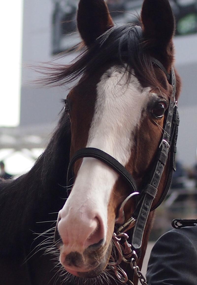 keiba 1586748397 5701 - 【画像】暇だから可愛い馬の画像をみよう