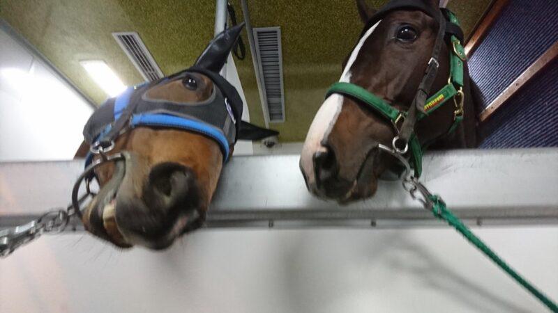 keiba 1586748397 601 - 【画像】暇だから可愛い馬の画像をみよう