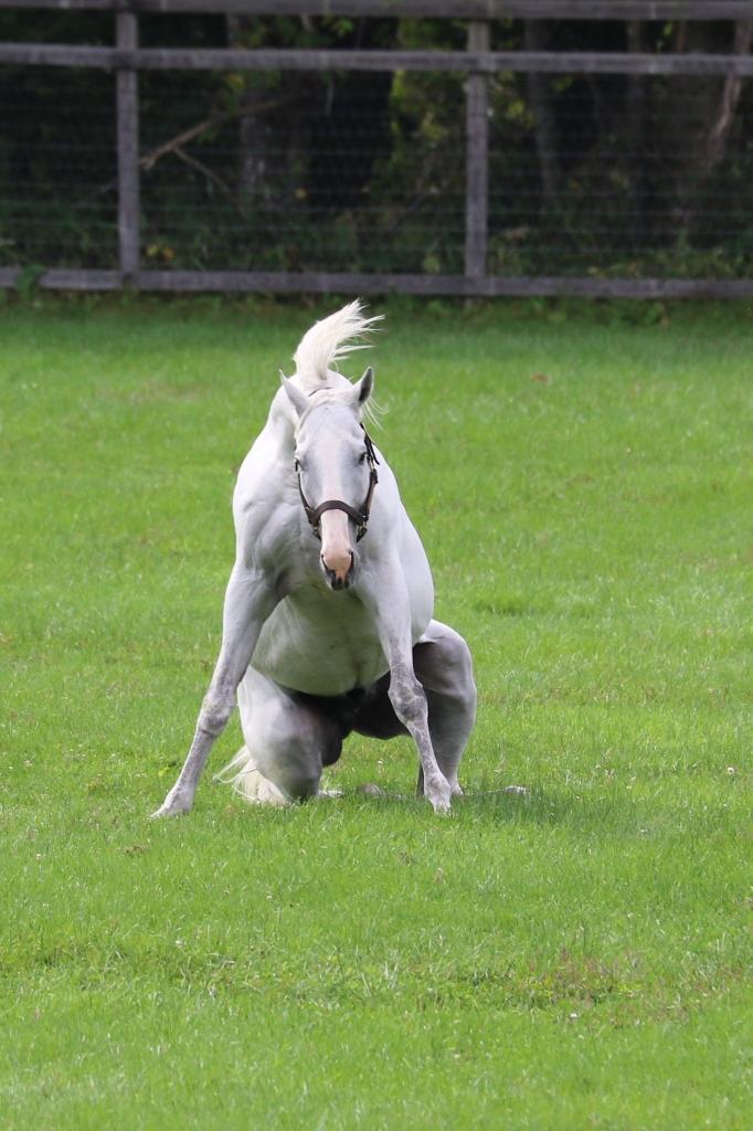 keiba 1586748397 6201 - 【画像】暇だから可愛い馬の画像をみよう