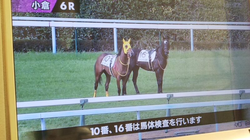 keiba 1586748397 6301 - 【画像】暇だから可愛い馬の画像をみよう