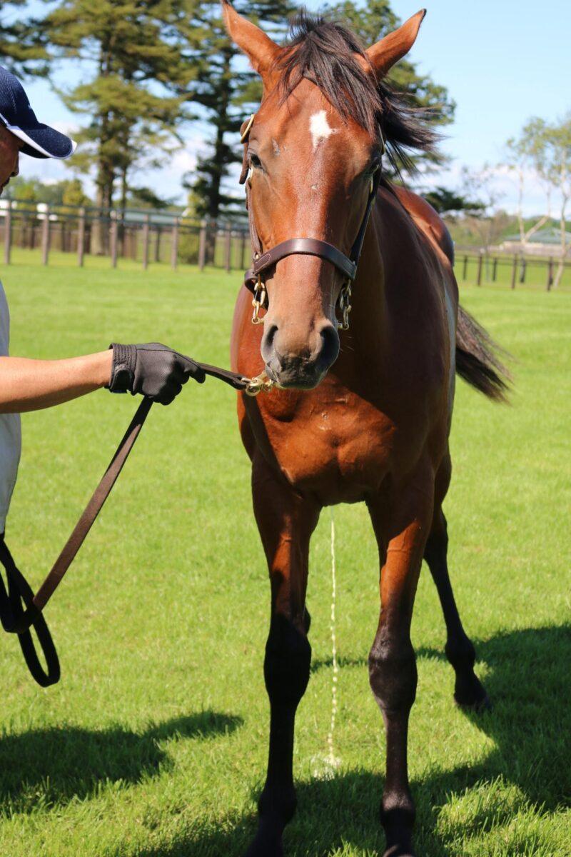 keiba 1586748397 6601 - 【画像】暇だから可愛い馬の画像をみよう