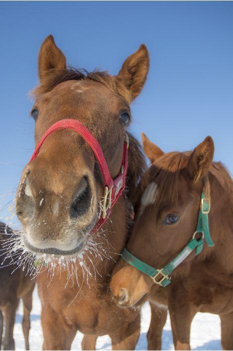 keiba 1586748397 901 - 【画像】暇だから可愛い馬の画像をみよう