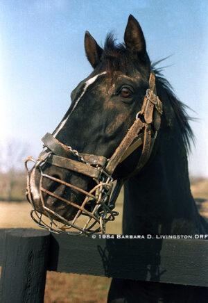 livejupiter 1627975851 101 300x436 - 【競馬】ユーバーレーベンにそっくりな馬見つけたwwwwwww