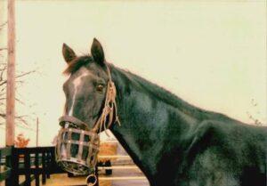 livejupiter 1627975851 501 300x209 - 【競馬】ユーバーレーベンにそっくりな馬見つけたwwwwwww