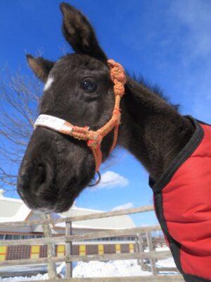 livejupiter 1627975851 502 300x400 - 【競馬】ユーバーレーベンにそっくりな馬見つけたwwwwwww