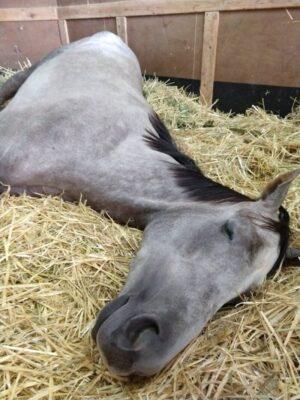 livejupiter 1627993875 11001 300x400 - 【画像】スヤスヤサリオスよりかわいい馬の画像はない説