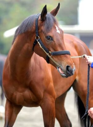 livejupiter 1627993875 12801 300x411 - 【画像】スヤスヤサリオスよりかわいい馬の画像はない説