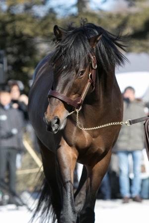 livejupiter 1627993875 13901 - 【画像】スヤスヤサリオスよりかわいい馬の画像はない説