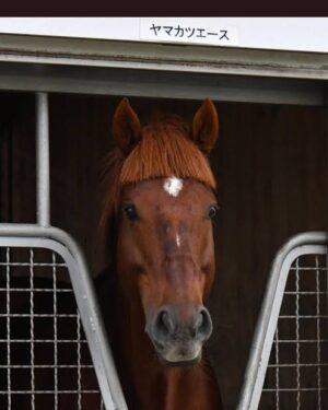 livejupiter 1627993875 1401 300x375 - 【画像】スヤスヤサリオスよりかわいい馬の画像はない説