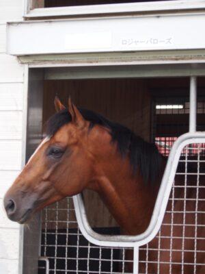 livejupiter 1627993875 14201 300x400 - 【画像】スヤスヤサリオスよりかわいい馬の画像はない説