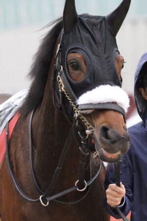 livejupiter 1627993875 15801 300x451 - 【画像】スヤスヤサリオスよりかわいい馬の画像はない説