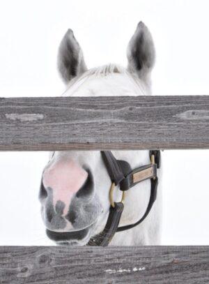 livejupiter 1627993875 17201 300x407 - 【画像】スヤスヤサリオスよりかわいい馬の画像はない説