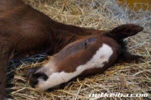 livejupiter 1627993875 18301 300x199 - 【画像】スヤスヤサリオスよりかわいい馬の画像はない説