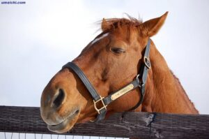 livejupiter 1627993875 2201 300x199 - 【画像】スヤスヤサリオスよりかわいい馬の画像はない説