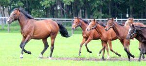 livejupiter 1627993875 23301 300x135 - 【画像】スヤスヤサリオスよりかわいい馬の画像はない説